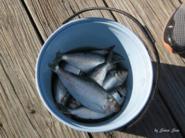 去Key West的路上,一定不要错过这个有趣的喂鱼体验