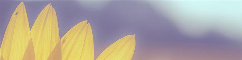 寻找向日葵花海