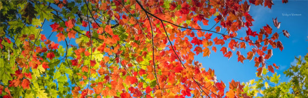 红叶季,探寻佛蒙特赏秋秘境