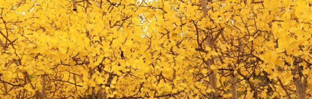 找个离家近的地方去赏秋——全美观叶指南